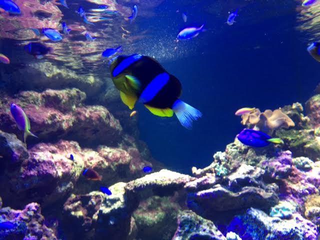 江ノ島水族館に行ってきました!